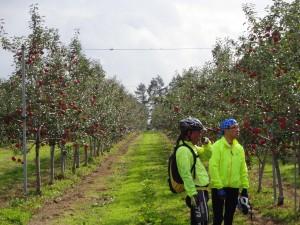 リンゴ畑-2